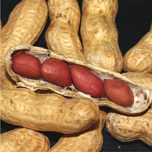 FEINE RARITäT! 10+ Samen Valencia Pink Peanut Erdnuss