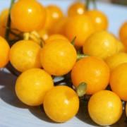 Paradicsom arany ribizli