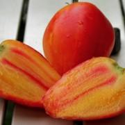 Paradicsom narancs orosz